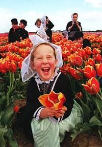 tulip fields in New Zealand