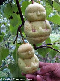 buddha moulded fruit