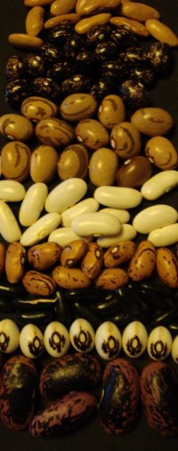 heirloom bean varieties New Zealand
